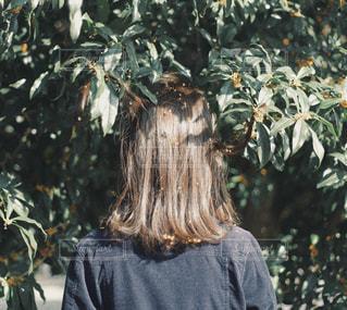 ツリーの前に立っている人の写真・画像素材[1614059]