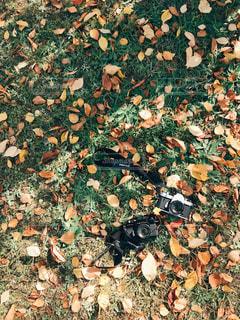 秋色足元の写真・画像素材[1614115]