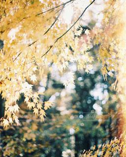 近くの木のアップの写真・画像素材[1614142]