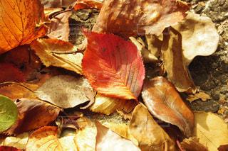 歩道の落ち葉の写真・画像素材[892128]