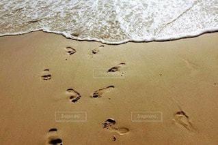 浜辺に立つカモメの群れの写真・画像素材[2330641]