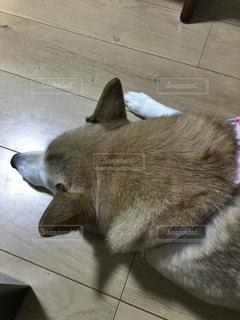 犬の写真・画像素材[473683]