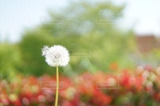 花畑の写真・画像素材[11151]