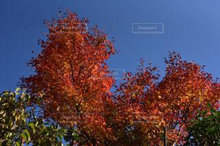 紅葉,箱根,金時山,長安寺