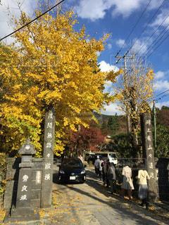 紅葉,箱根,金時山,草木,長安寺