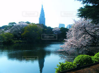 新宿,新宿御苑