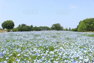 花絶景 - No.1154356