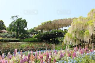 花絶景の写真・画像素材[1154367]