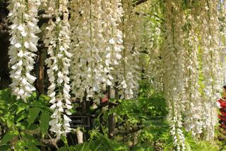 花絶景の写真・画像素材[1154375]