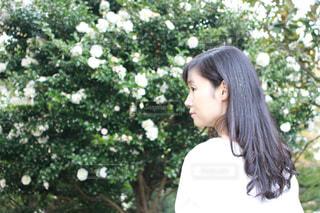 資生堂TSUBAKIさらさらストレートの写真・画像素材[1609320]