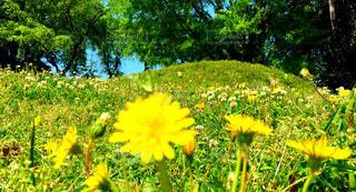 芝生の写真・画像素材[466659]