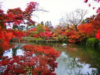木々 に囲まれた水の体の上の橋の写真・画像素材[864659]