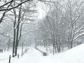 冬,雪,屋外,白,北海道,樹木,富良野,ホワイト,雪国