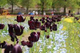 花の写真・画像素材[473624]