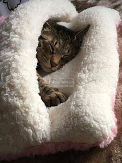 猫,冬  猫  布団,にゃんこ   お昼寝,寒さ対策 ねこ