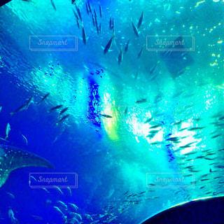 海,夏,南国,青,水族館,沖縄,癒し,旅行,エメラルドグリーン,亀