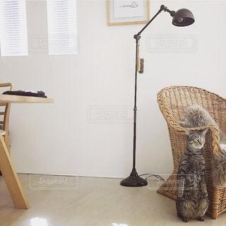 猫の写真・画像素材[315640]