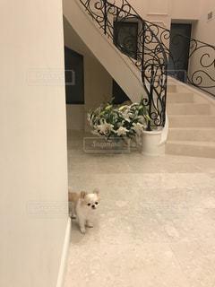 部屋で犬の地位の写真・画像素材[998917]