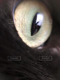 猫,インテリア,パーツ,目,ミクロ