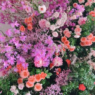 春,東京,ピンク,撮影,flower,pink,shooting