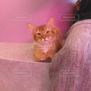 猫,ピンク,子猫,cat,猫カフェ