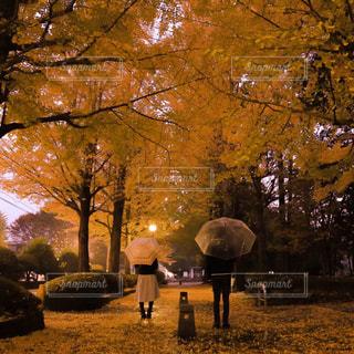 木の隣に立っている人のグループの写真・画像素材[869886]