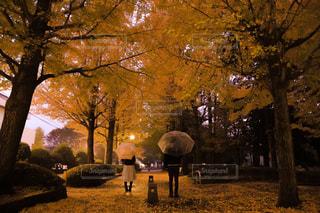公園の大きな木の写真・画像素材[880322]