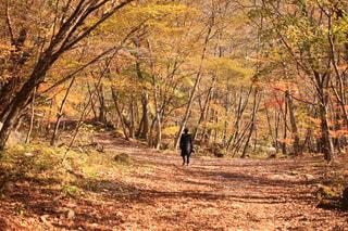 雑木林の木の写真・画像素材[880325]