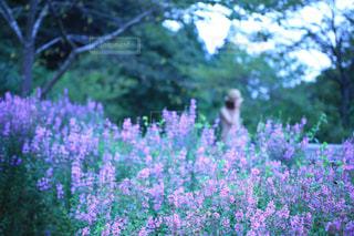 花畑にいる女性の写真・画像素材[895756]