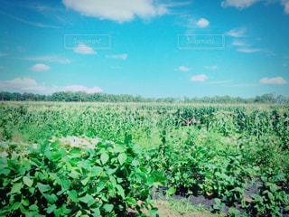 空の写真・画像素材[198809]