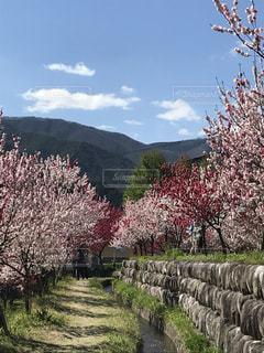 春の写真・画像素材[468231]