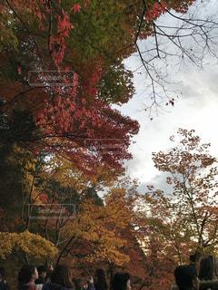 京都紅葉 - No.873572