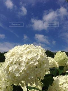 近くの花のアップ - No.933572