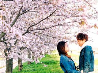 自然,花,桜,カップル,笑顔,幸せ,わたしの街