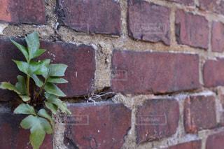 植物 - No.465231
