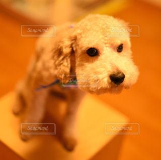 犬 - No.490905