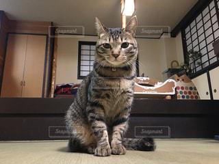 猫,動物,ペット,子猫,人物,ネコ