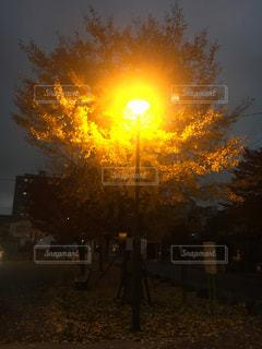 背景の夕日とツリーの写真・画像素材[857237]