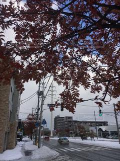 雪に覆われた木の写真・画像素材[885219]