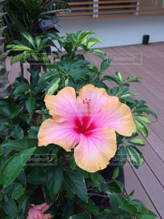 植物にピンクの花の写真・画像素材[901650]