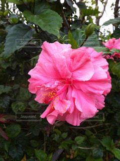 近くの花のアップの写真・画像素材[901652]