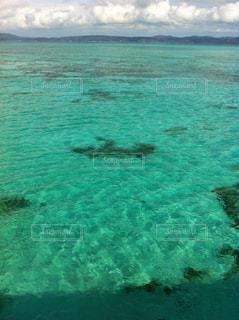 水の中の魚の群れの写真・画像素材[901864]