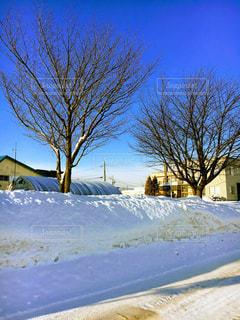 雪に覆われたフィールドの写真・画像素材[1116184]