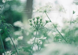 自然 - No.457859