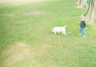 犬,動物,散歩,子供,男の子,犬の散歩,ワンチャン