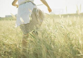 夏,夕日,足元,茶色,子供,女の子,猫じゃらし,ピクニック,スカート,逆光,ベージュ,ミルクティー,ギンガムチェック,ミルクティー色,エプロンスカート