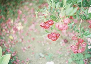 花の写真・画像素材[2006682]