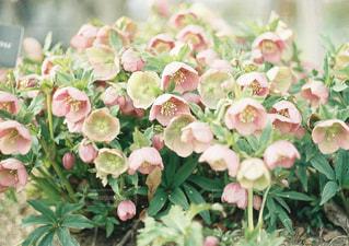花の写真・画像素材[2006733]
