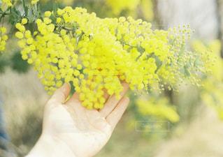 花の写真・画像素材[2006798]