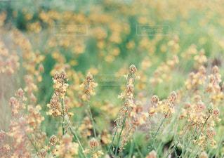 花の写真・画像素材[2006806]